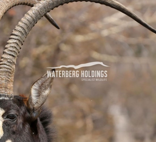 Waterberg Holdings Brand
