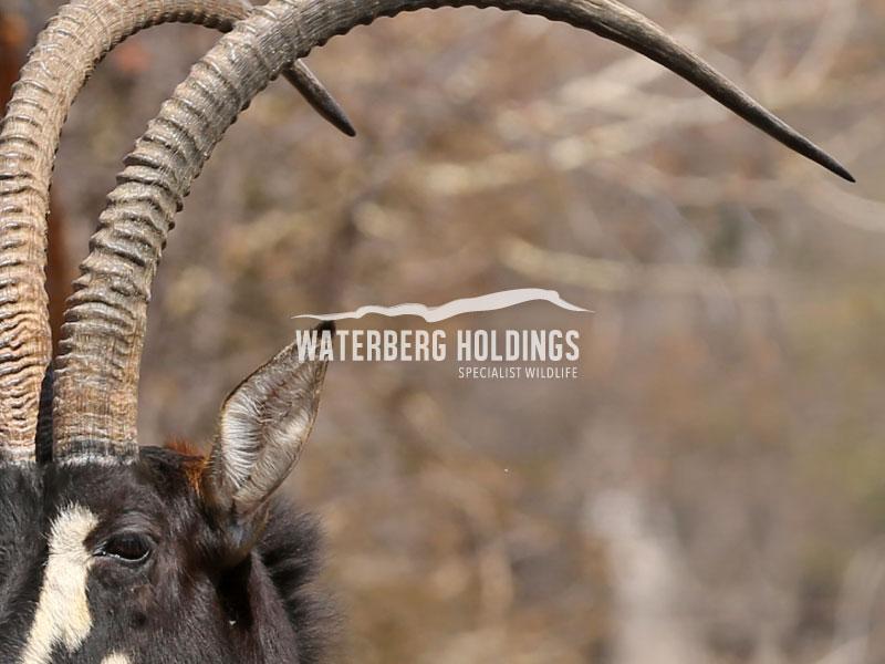 Waterberg Holdings Brand